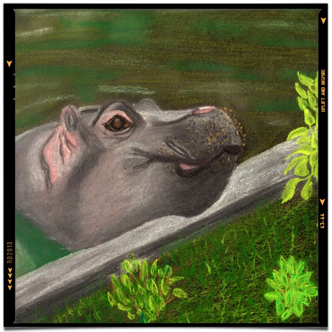 Watercolour Baby Hippo By Truth Devour